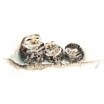 Sleepy Little Owls by Sarah Reilly, Suffolk Artist, Love Country by Sarah Reilly