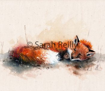 Sleepy Mr Fox