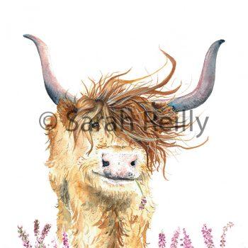 Highland Harriet