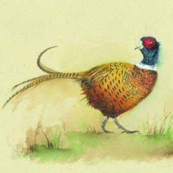 The Gentle Pheasant